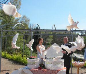 160506-010-Hochzeitstauben