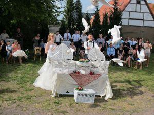 160521-015-Hochzeitstauben