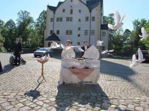 2017-021-HochzeitMitTaubenauflass