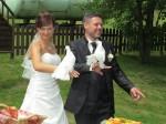 2017-060-HochzeitMitTaubenauflass